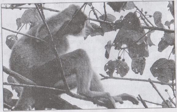মধুপুরের বনে বাদাড়ে